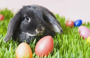 top10_easter_bunny