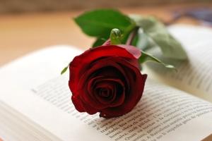Rosa-i-llibre-Sant-Jordi-copia
