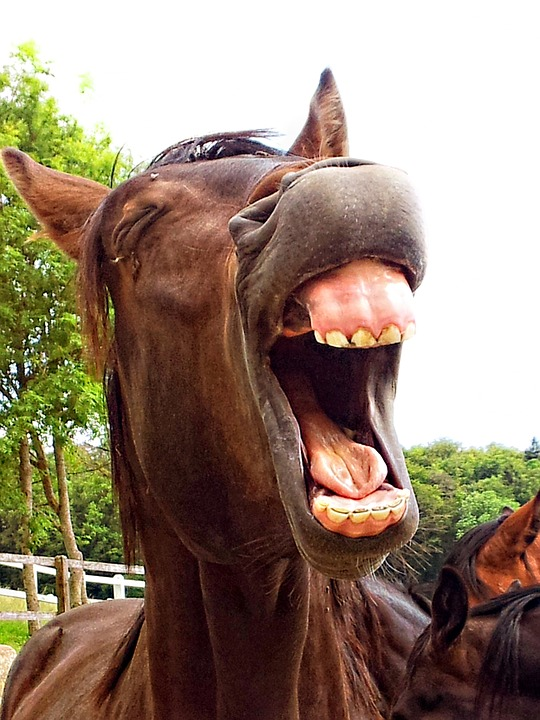 Horse laughing, as multilingual people are funnier
